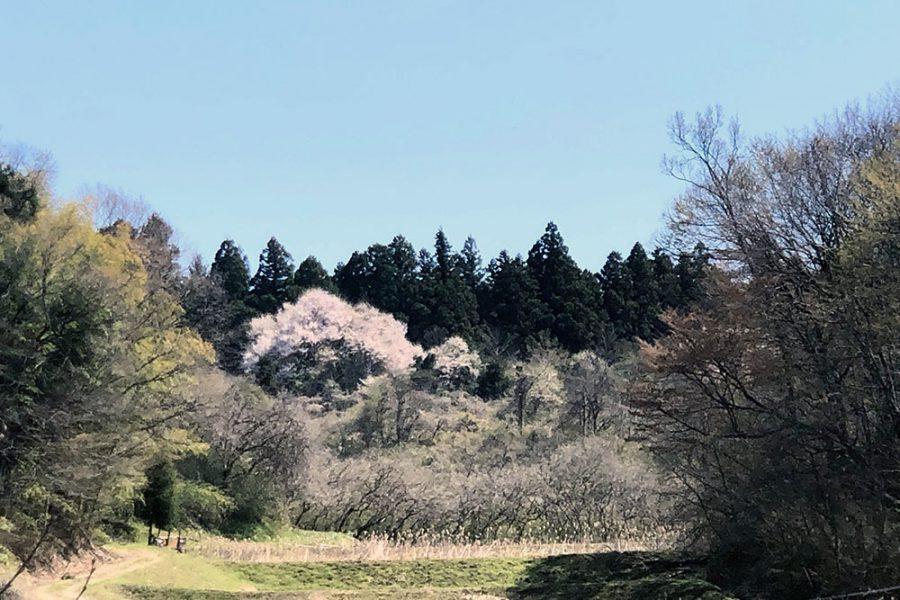 Sakura BushCraft Field