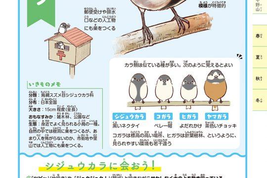 一日一種『探検!里山いきもの図鑑』